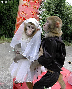 monkey_wedding