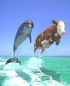stress dolphin