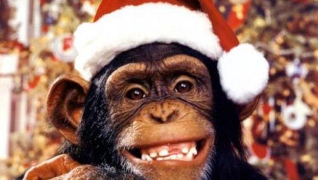 chimp xmas 1