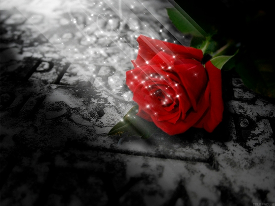 like_a_rose_on_the_grave_of_lo_by_telepadune