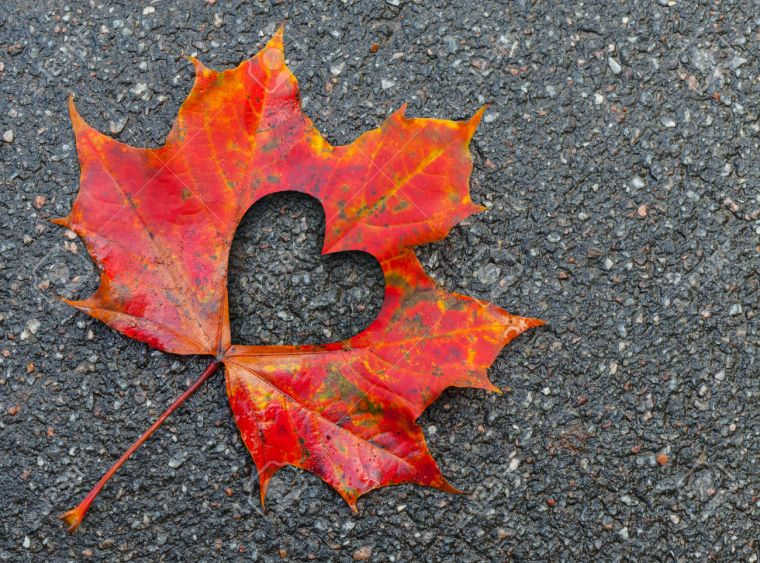 Red maple leaf lays on dark asphalt road. Macro photo