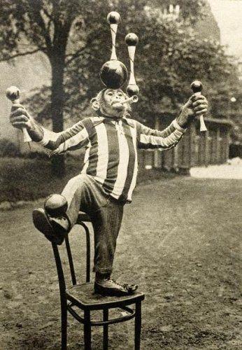 juggling chimp