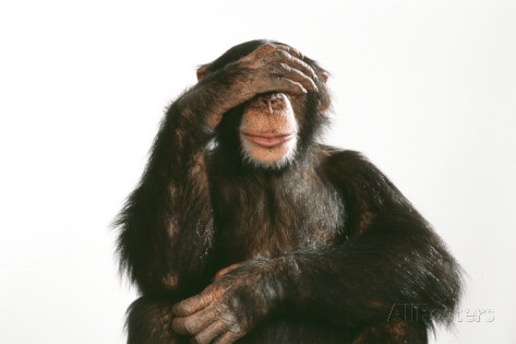 chimpanzee-hand-over-eyes-see-no-evil