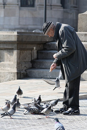 Man and pidgeons
